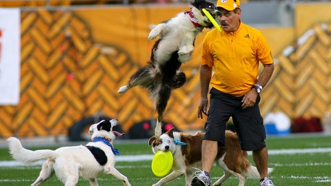 """Acrobatic dogs at Steelers game"""