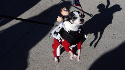 This Patriots fan's dog's name is Armanie
