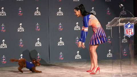 Pooch on the stage at Super Bowl XLIX