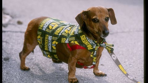 Packers Dachshund (da Don)