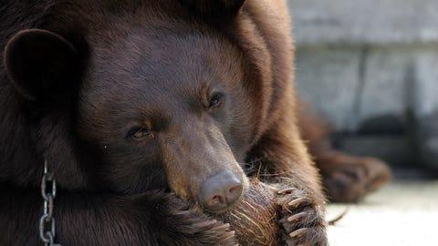 Lady & Joy — Baylor Bears