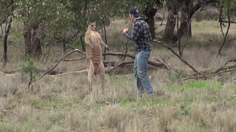 Man punches a kangaroo to save his dog