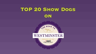 Road To Westminster (RTW): Top 20 Dogs | Part 3