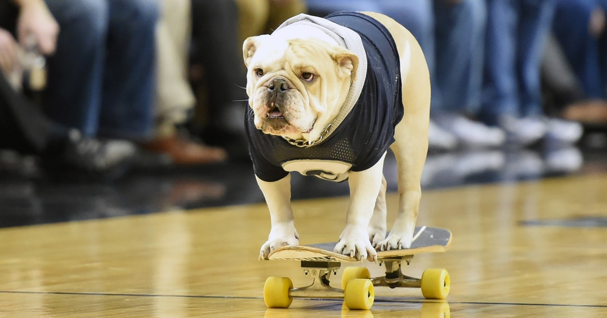 Georgetown Baskteball Is Giving Away A Very Cute Bulldog