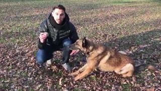 The German Shepherd won the #WKCDogShow | PROCast