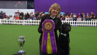 Obedience Winner | 2017 Westminster Dog Show
