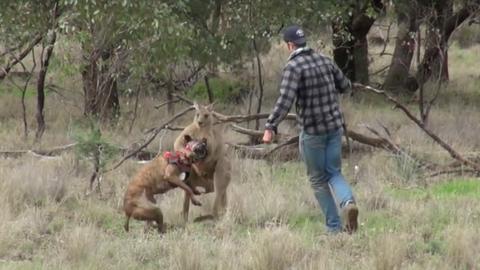 Kangaroo Punch