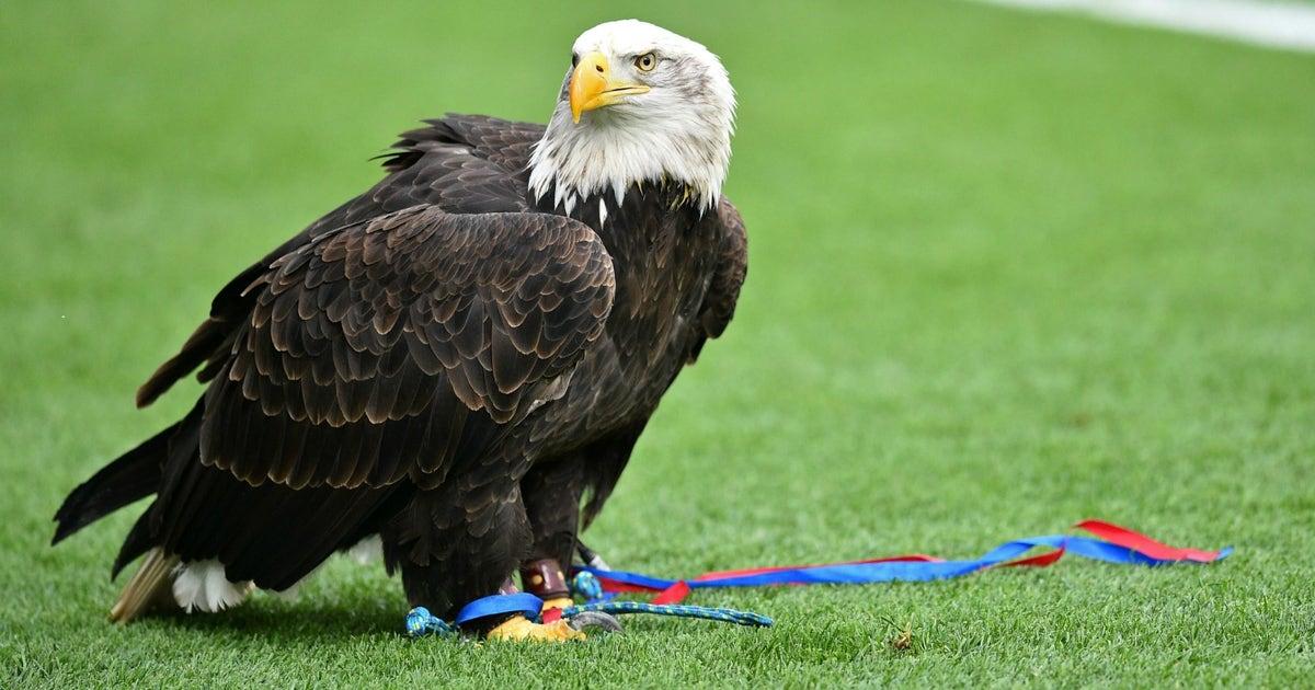 Eagles Crystal Palace