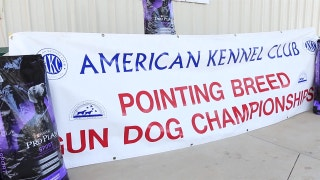 Gun Dog Trophy
