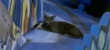 Watch: Cat climbs and chills on Marlins home run sculpture during game