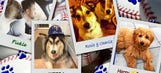 Bark at the Park: Twins players showcase adorable pet pooches