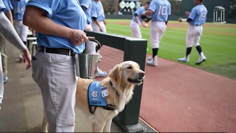 Amazing service dog may be North Carolina baseball's secret weapon
