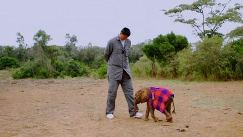 Yao Ming vs. Baby Elephant