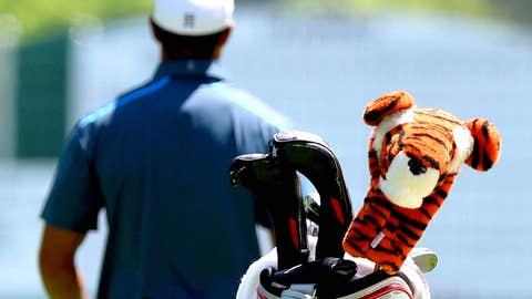 Tiger and tiger