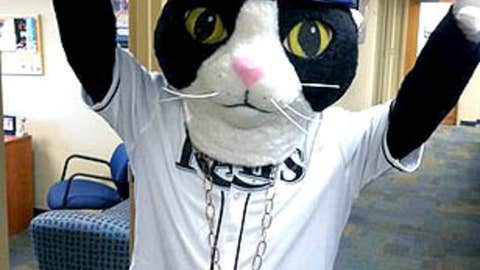DJ Kitty, Tampa Bay Rays
