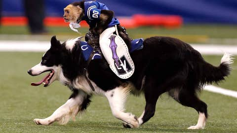 Giddy up, little doggy