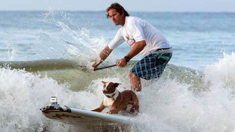 In this handout provided by Friends Furever, Chris De Aboitiz rides a wave with his surf dog