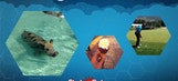 Best Tweets: Swimming Pigs And Other Vacation Pics