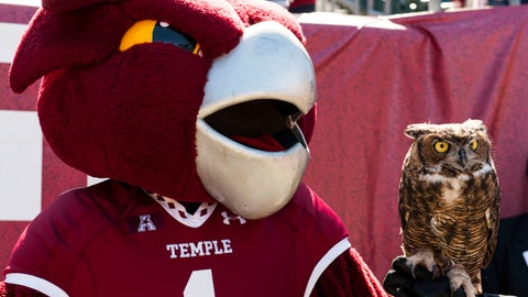 Stella - Temple Owls