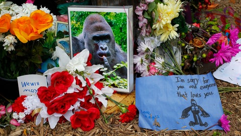 """""""There is a Harambe Memorial Growing Inside the Rio Olympic Village"""""""