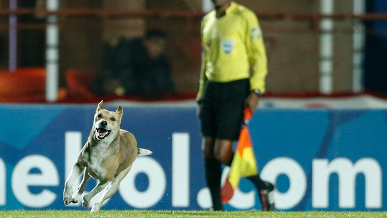 Watch the happiest dog ever invade the pitch during a match in Argentina