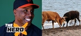 Barry Bonds and the 'cattle steroids' era shows how baseball has changed – 'The Herd'