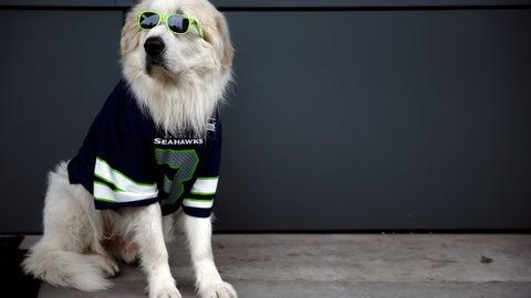 Cool Seahawks dog
