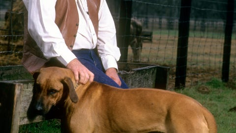 Houston Oilers head coach Bum Phillips and his large pooch
