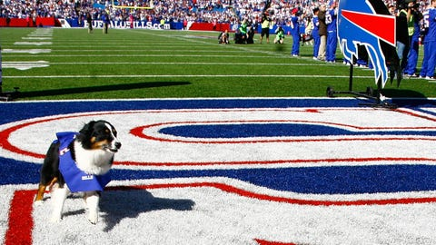 Terry Pegula's dog goes for an on-field jaunt