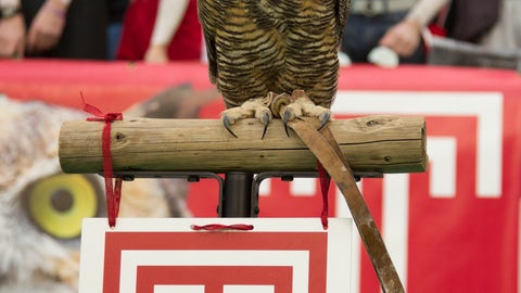 Stella the Owl — Temple Owls