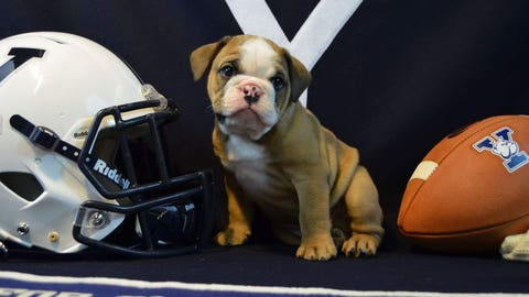 Handsome Dan — Yale Bulldogs