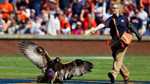 War Eagle — Auburn Tigers