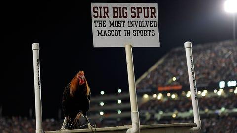 Sir Big Spur — South Carolina Gamecocks