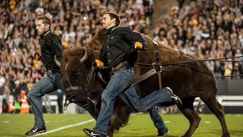 Ralphie — Colorado Buffaloes