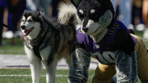 Dubs — Washington Huskies