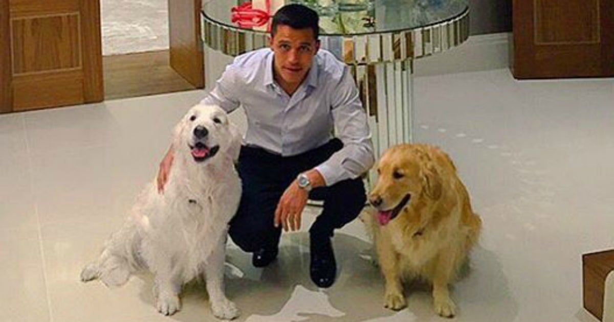 d6fa78ae9 Arsenal fans hang massive banner honoring Alexis and his two pups ...