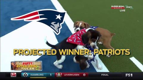 FOX Sports Live's puppies: Patriots
