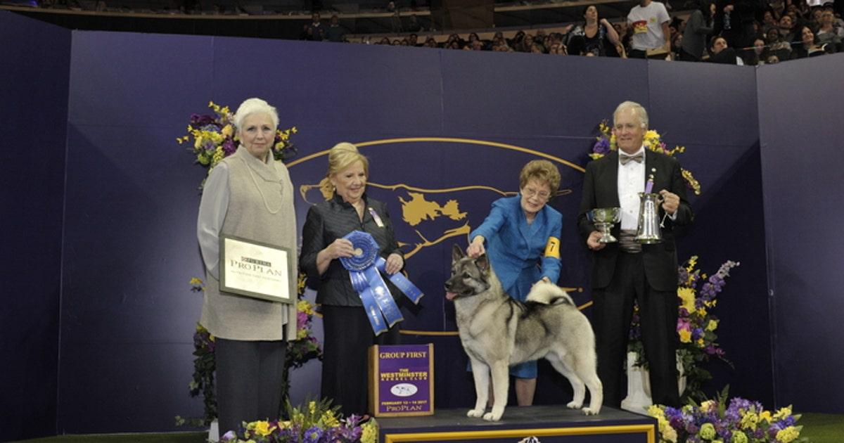 Kennel Club Of Buffalo Dog Show