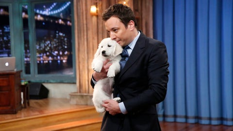 LATE NIGHT WITH JIMMY FALLON -- Episode 963 -- Pictured: Puppies help Jimmy predict the Super Bowl 48 winner on Thursday, January 30, 2014 -- (Photo by: Lloyd Bishop/NBC/NBCU Photo Bank via Getty Images)..