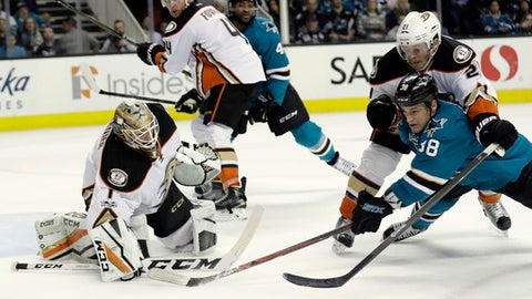 Anaheim Ducks goalie Jonathan Bernier, left, guards the goal as teammate Chris Wagner, top right, defends San Jose Sharks' Micheal Haley, bottom right, during the second period of an NHL hockey game Saturday, March 18, 2017, in San Jose, Calif. (AP Photo/Marcio Jose Sanchez)