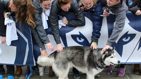 Fans pet University of Connecticut mascot Jonathan, the Husky, during a send-off rally for the Connecticut women's basketball team outside Gampel Pavilion in Storrs, Conn., Tuesday, March 28, 2017, as they prepare to board a bus to depart for the Final Four of the NCAA college basketball tournament in Dallas. (AP Photo/Pat Eaton-Robb)
