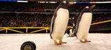 PETA rips NHL's use of penguins before Stadium Series game