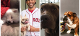 Celebrate National Puppy Day with this round-up of athletes and dogs