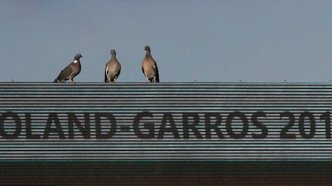 Three pigeons sit on an electronic scoreboard of the French Open tennis tournament at the Roland Garros stadium, in Paris, France. Tuesday, May 30, 2017. (AP Photo/Petr David Josek)