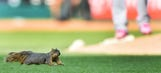 WATCH: Squirrel interrupts Twins game