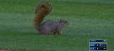 Squirrel delays Twins–Indians for four whole minutes