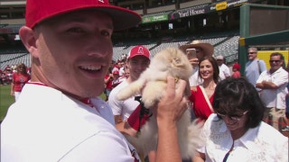 Angels Weekly: Photo Day at the Big A