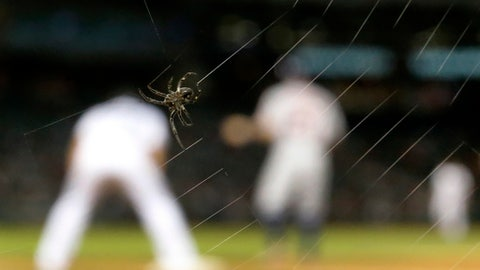 A spider spins its web along the first base dugout during the ninth inning of a baseball game between the Chicago White Sox and the Houston Astros Tuesday, Aug. 8, 2017, in Chicago. The White Sox won 8-5. (AP Photo/Charles Rex Arbogast)