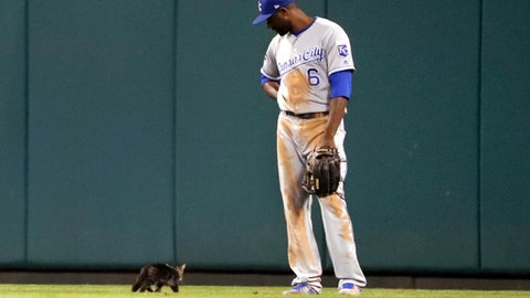 Kansas City Royals center fielder Lorenzo Cain watches as a cat runs past during the sixth inning of the team's baseball game against the St. Louis Cardinals on Wednesday, Aug. 9, 2017, in St. Louis. (AP Photo/Jeff Roberson)
