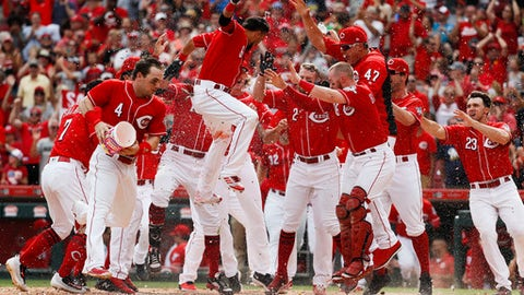 Cincinnati Reds' Billy Hamilton (6) celebrates with his teammates after hitting a walk-off solo home run off Milwaukee Brewers relief pitcher Josh Hader in the ninth inning of a baseball game, Monday, Sept. 4, 2017, in Cincinnati. (AP Photo/John Minchillo)